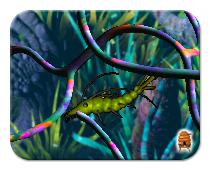 Creatures Aquatilis Caverna Version 2 Metaroom